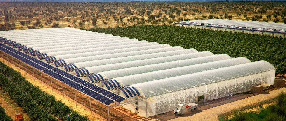 Seawater Solar Greenhouse Food In The Desert Energy